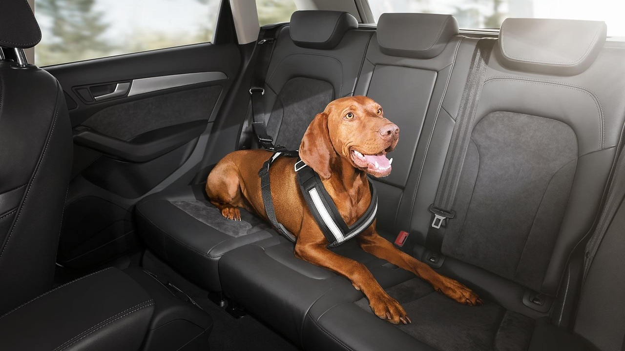 Safety harness for dogs, medium. Also available in small, large and extra large.  Prices from £63-£109
