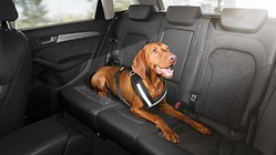 Safety harness for dogs